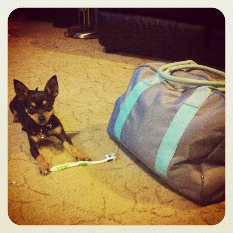 Tequila likes to help herself to things in my gym bag. Errrr... You can keep that one.